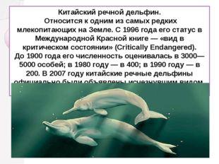 Китайский речной дельфин. Относится к одним из самых редких млекопитающих на