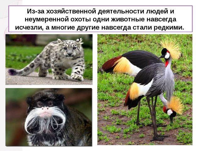 Из-за хозяйственной деятельности людей и неумеренной охоты одни животные навс...