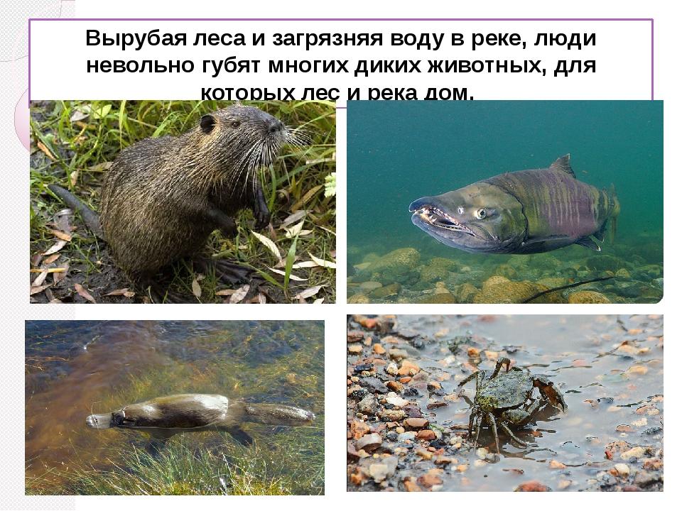 Вырубая леса и загрязняя воду в реке, люди невольно губят многих диких животн...