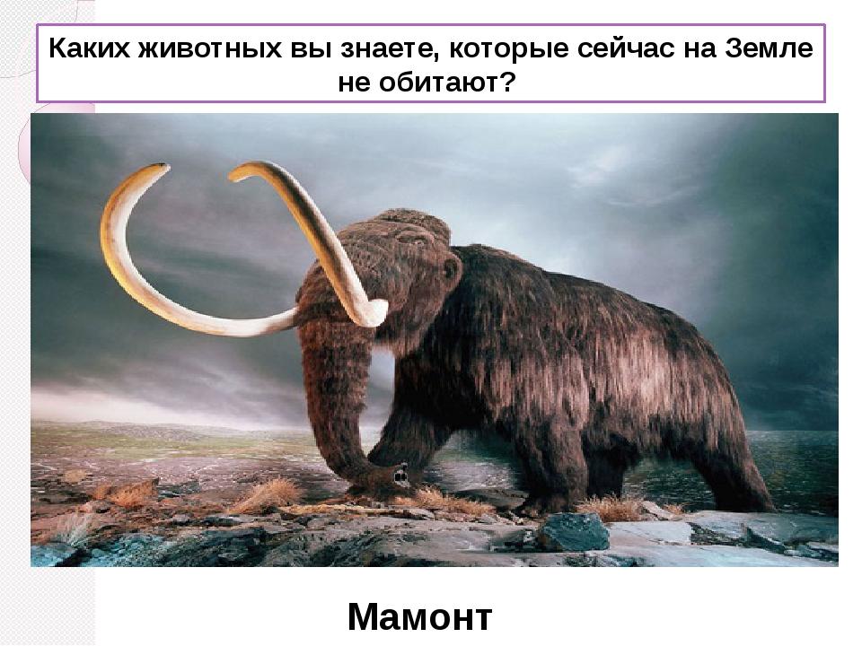 Каких животных вы знаете, которые сейчас на Земле не обитают? Мамонт