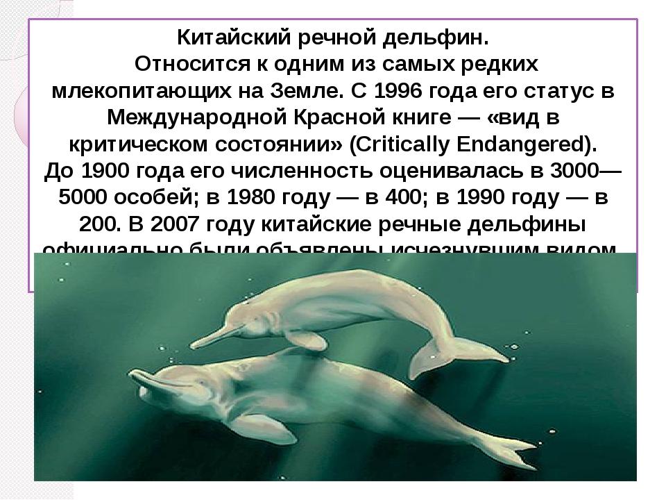Китайский речной дельфин. Относится к одним из самых редких млекопитающих на...
