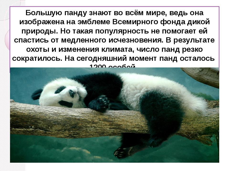 Большую панду знают во всём мире, ведь она изображена на эмблеме Всемирного ф...