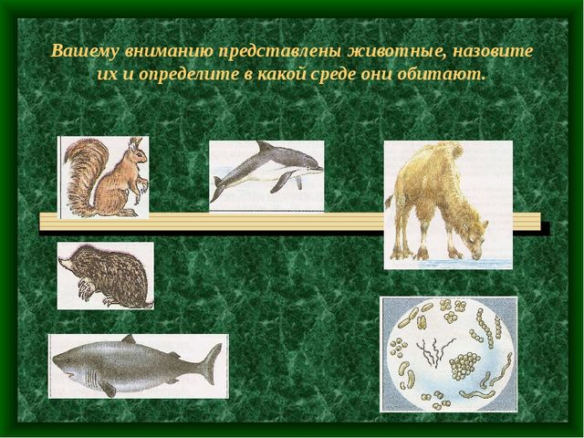 Вашему вниманию представлены животные, назовите их и определите в какой среде...