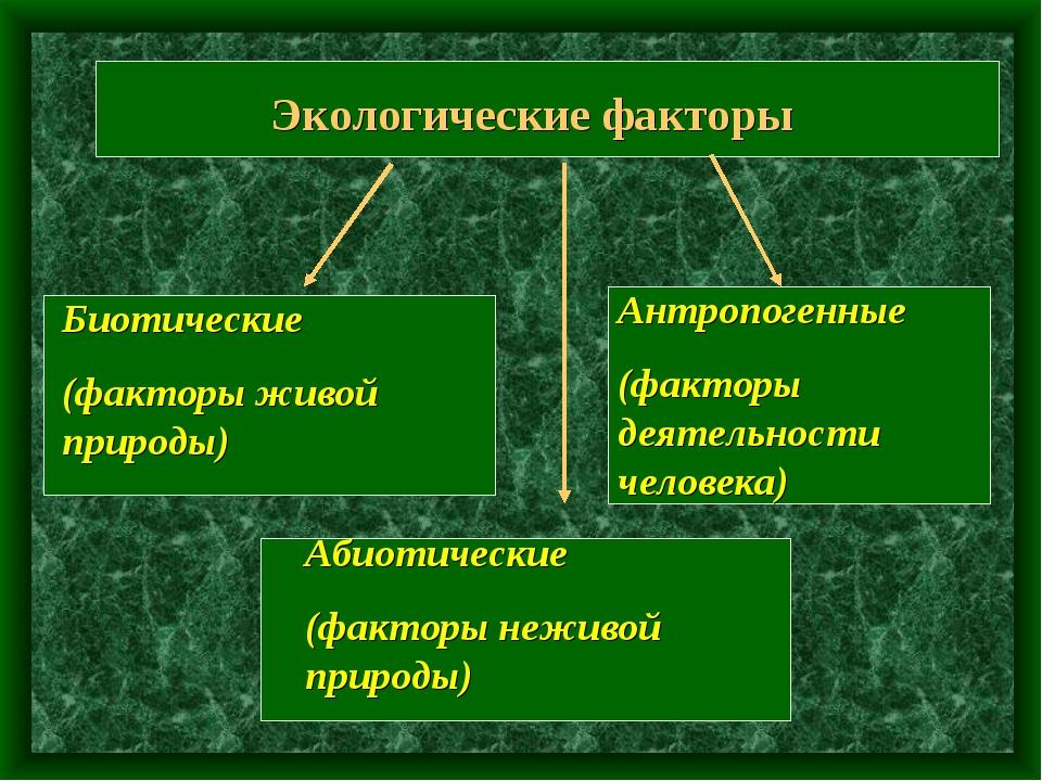 Экологические факторы Биотические (факторы живой природы) Абиотические (факто...