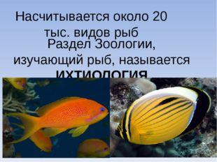 Насчитывается около 20 тыс. видов рыб Раздел Зоологии, изучающий рыб, называе