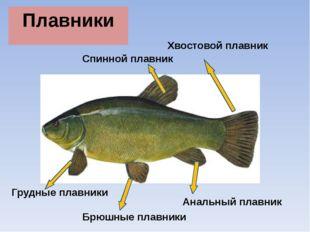 dlya-chego-nuzhen-analniy-plavnik