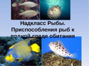 Надкласс Рыбы. Приспособления рыб к водной среде обитания