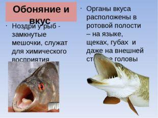 Обоняние и вкус Ноздри у рыб - замкнутые мешочки, служат для химического восп