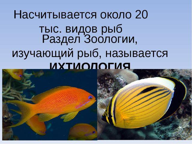 Насчитывается около 20 тыс. видов рыб Раздел Зоологии, изучающий рыб, называе...