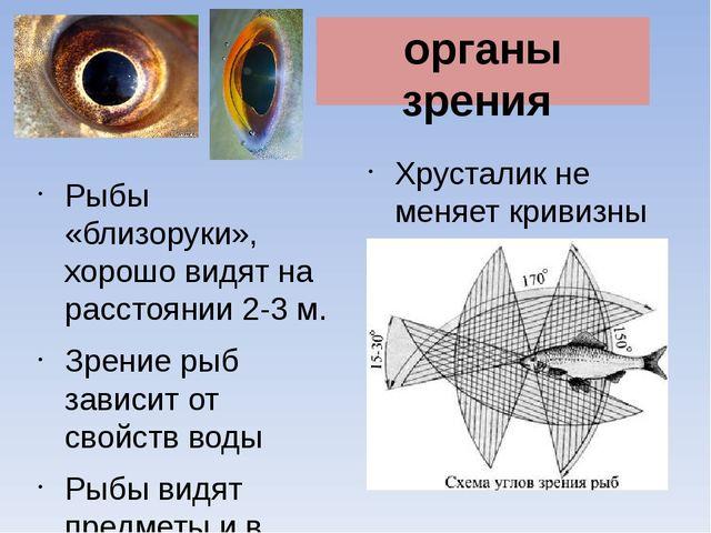 Хрусталик не меняет кривизны Рыбы «близоруки», хорошо видят на расстоянии 2-3...