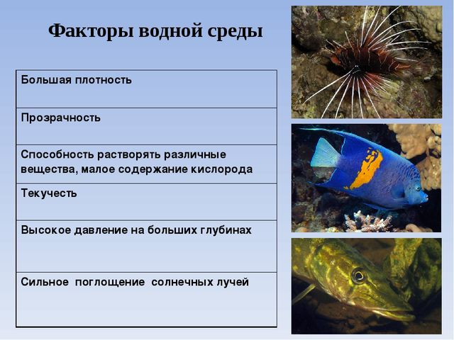 Факторы водной среды Большая плотность Прозрачность Способность растворять ра...