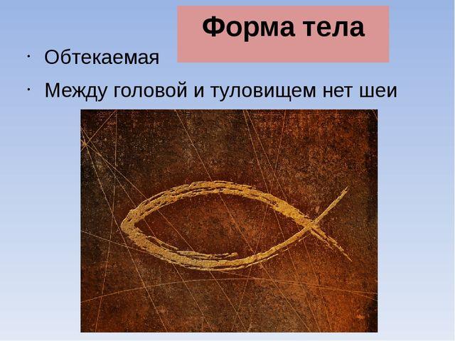 Форма тела Обтекаемая Между головой и туловищем нет шеи