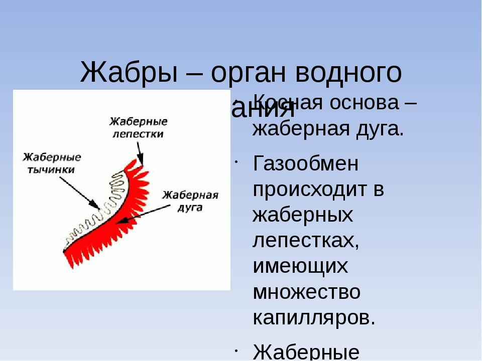 Жабры – орган водного дыхания Косная основа – жаберная дуга. Газообмен проис...