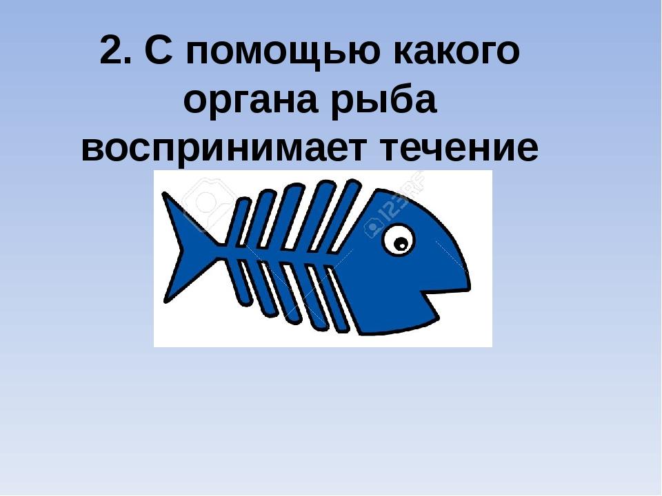 2. С помощью какого органа рыба воспринимает течение воды?