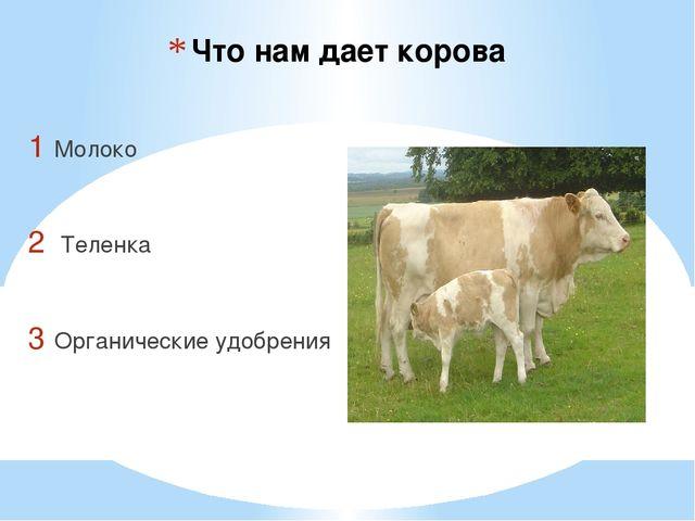 Что нам дает корова Молоко Теленка Органические удобрения