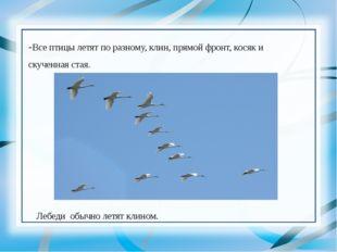 -Все птицы летят по разному, клин, прямой фронт, косяк и скученная стая. Леб