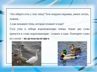 -Что общего есть у этих птиц? Тело покрыто перьями, умеют летать, плавать. А