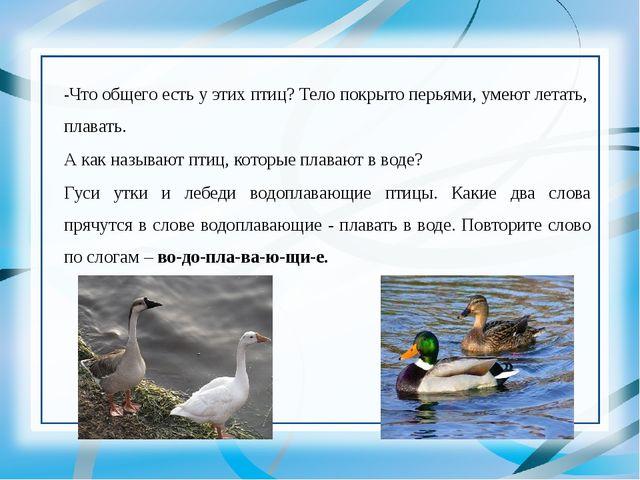 -Что общего есть у этих птиц? Тело покрыто перьями, умеют летать, плавать. А...