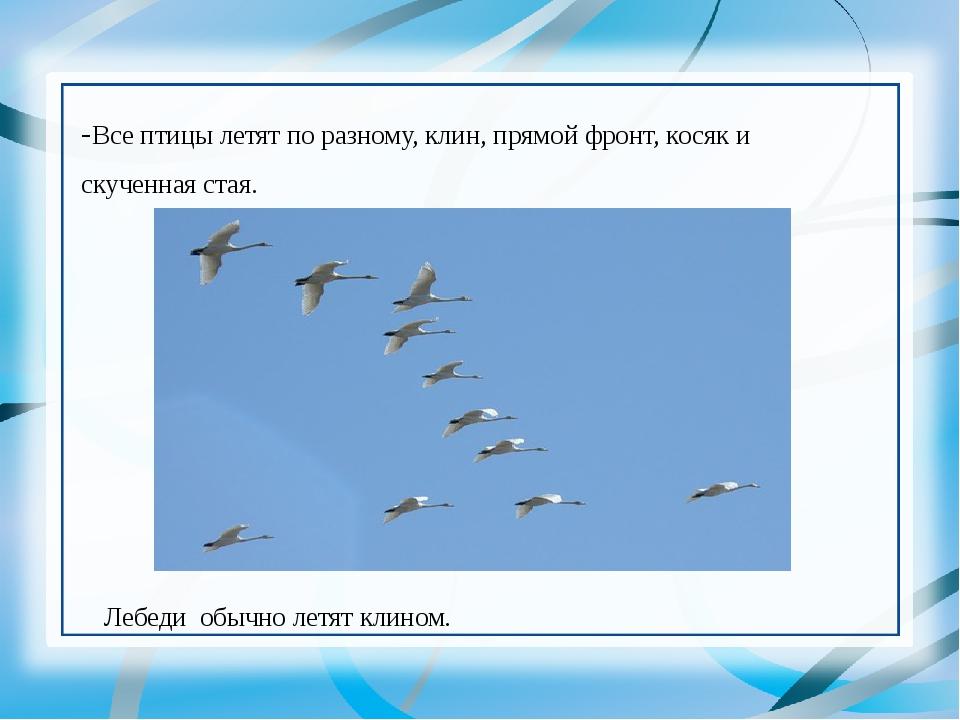 -Все птицы летят по разному, клин, прямой фронт, косяк и скученная стая. Леб...