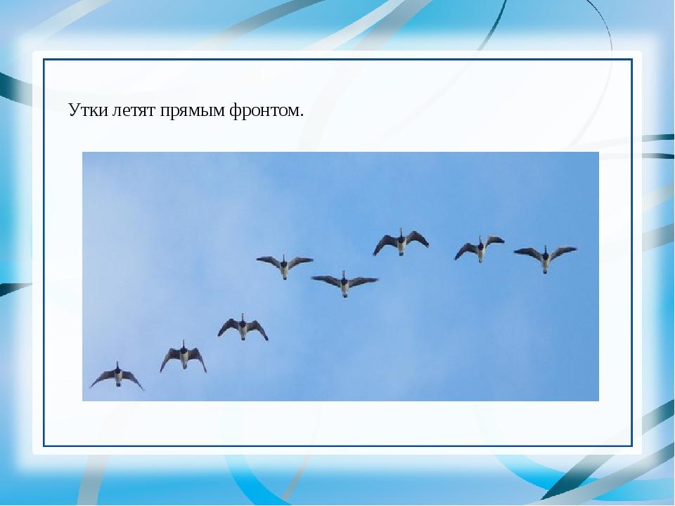 Утки летят прямым фронтом.