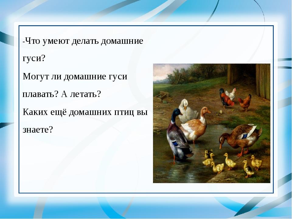 -Что умеют делать домашние гуси? Могут ли домашние гуси плавать? А летать? Ка...