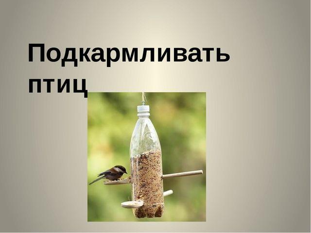 Подкармливать птиц