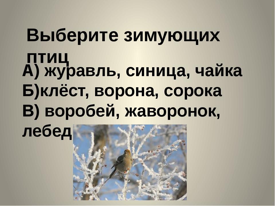 Выберите зимующих птиц А) журавль, синица, чайка Б)клёст, ворона, сорока В) в...
