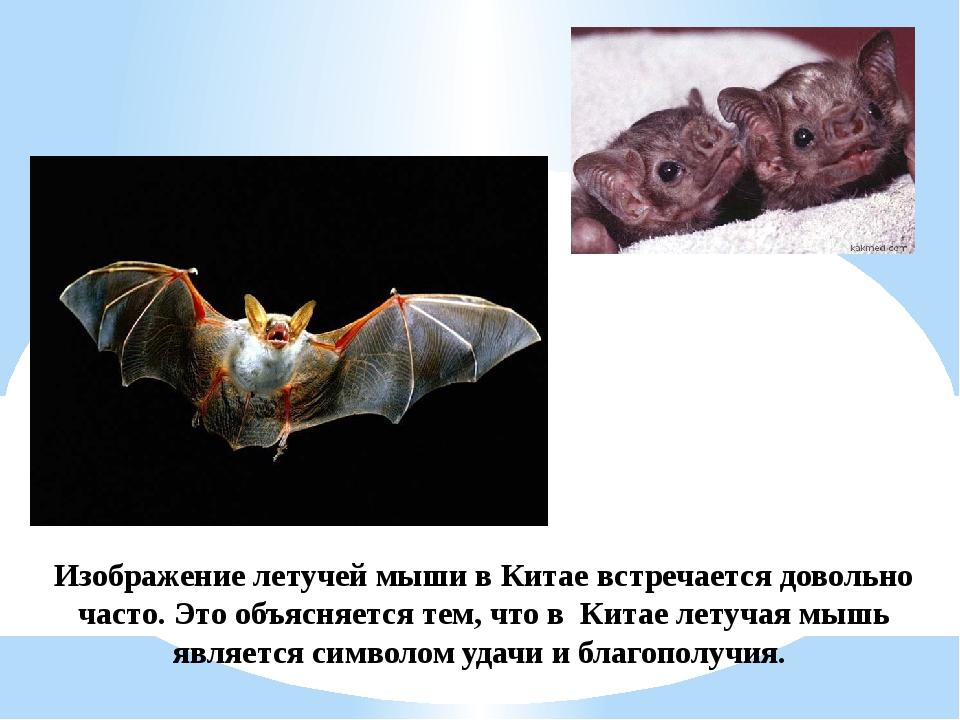 Изображение летучей мыши в Китае встречается довольно часто. Это объясняется...