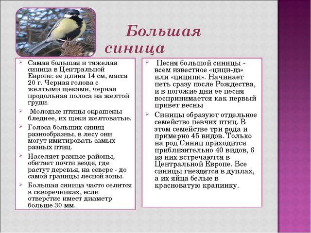 Самая большая и тяжелая синица в Центральной Европе: ее длина 14 см, масса 20...