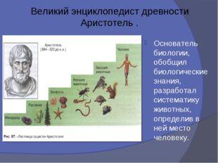 Великий энциклопедист древности Аристотель . Основатель биологии, обобщил био