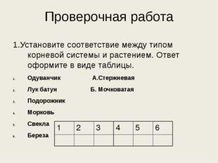 Проверочная работа 1.Установите соответствие между типом корневой системы и р