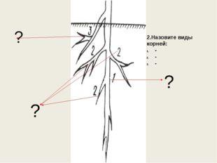 ? ? ? 2.Назовите виды корней: - - -