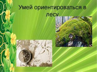 Умей ориентироваться в лесу