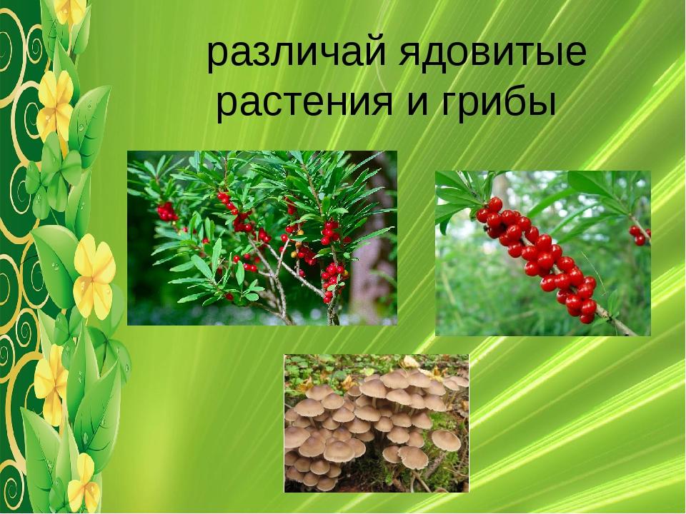 различай ядовитые растения и грибы