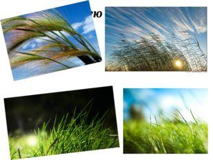 Лелею травы,