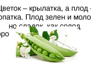 Цветок – крылатка, а плод – лопатка. Плод зелен и молод, но сладок, как солод
