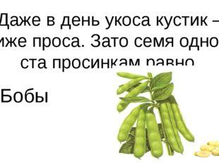 Даже в день укоса кустик – ниже проса. Зато семя одно – ста просинкам равно Б