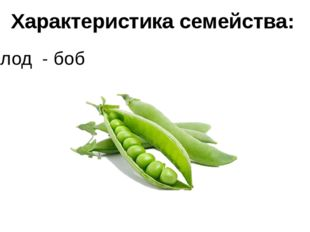 Характеристика семейства: плод - боб
