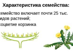 Характеристика семейства: семейство включает почти 25 тыс. видов растений; со