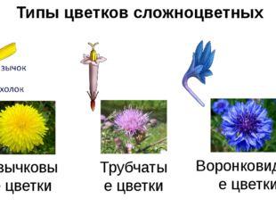 Типы цветков сложноцветных Язычковые цветки Трубчатые цветки Воронковидные цв