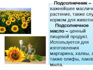 Подсолнечник – важнейшее масличное растение, также служит кормом для животны
