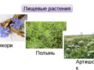 Пищевые растения Цикорий Полынь Артишок