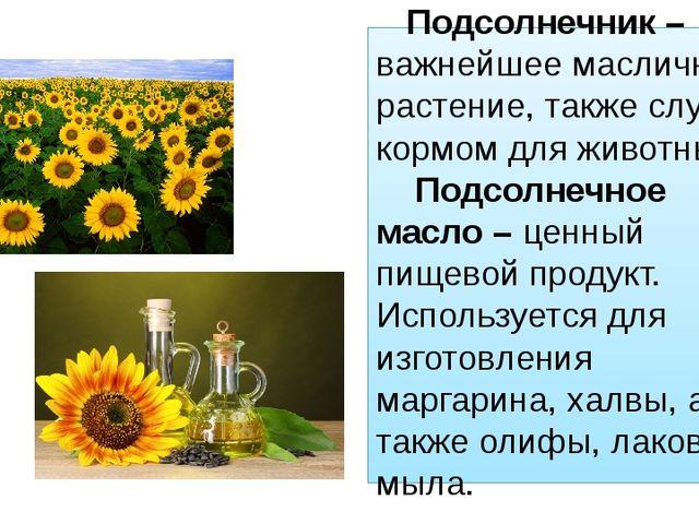Подсолнечник – важнейшее масличное растение, также служит кормом для животны...