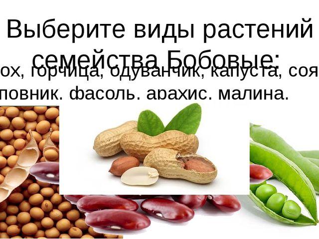 Выберите виды растений семейства Бобовые: горох, горчица, одуванчик, капуста,...