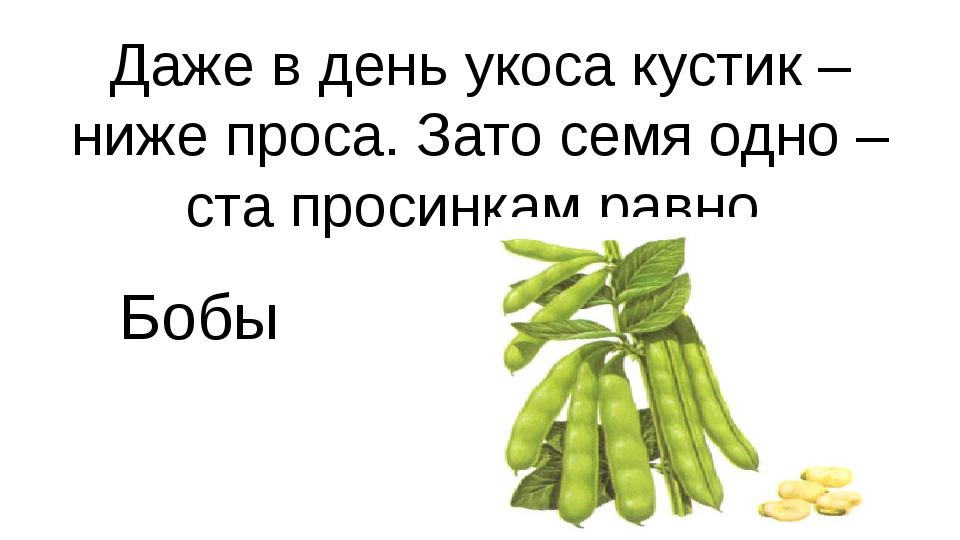 Даже в день укоса кустик – ниже проса. Зато семя одно – ста просинкам равно Б...