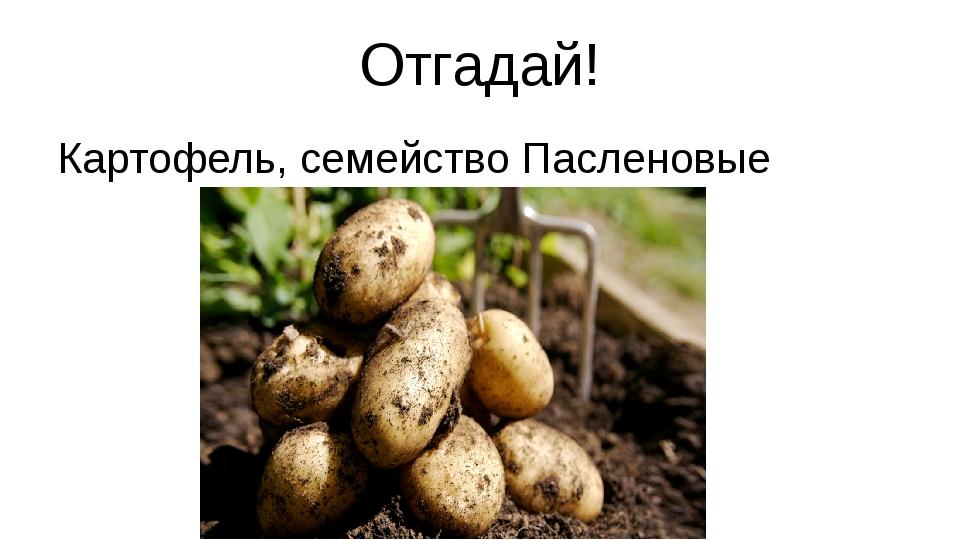 Отгадай! Картофель, семейство Пасленовые