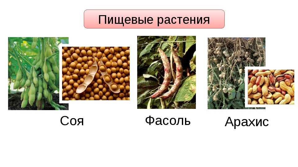 Пищевые растения Соя Фасоль Арахис