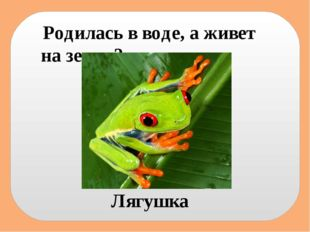 Родилась в воде, а живет на земле? Лягушка