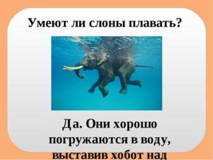 Умеют ли слоны плавать? Да. Они хорошо погружаются в воду, выставив хобот над