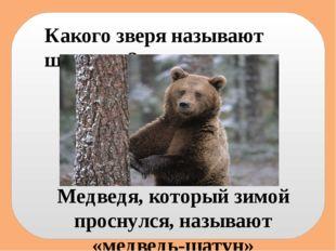 Какого зверя называют шатуном? Медведя, который зимой проснулся, называют «ме